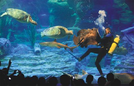 β3(火狐体育手机版火狐体育官网,Beta Three)音响完成国内第6个海洋游览馆扩声